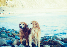 Doggies on the beach